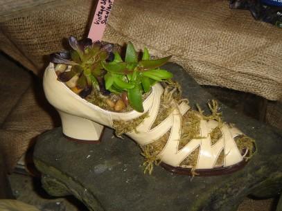 Vintage Shoe Succulent Garden- by Annette MacLean
